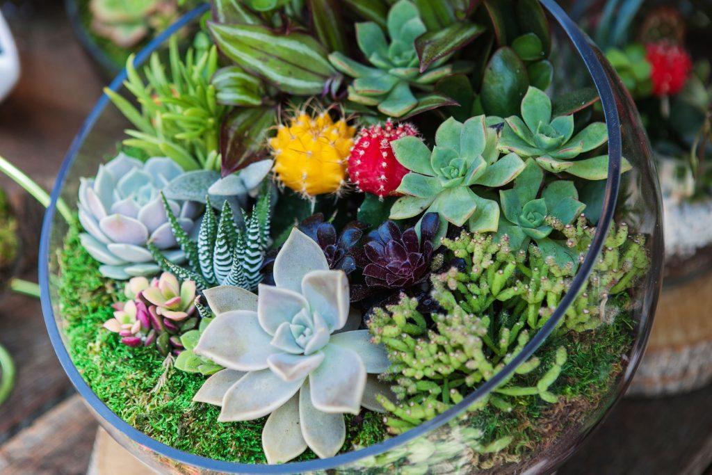 Kompozycja z sukulentów i kaktusów